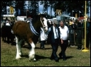 Image of Angus Show, Brechin & link to Brechin webpage